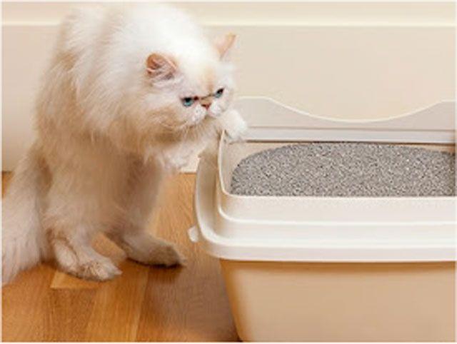 ¿Por qué mi gato orina o defeca fuera de la caja de arena?