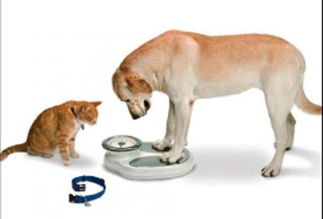 Riesgo de obesidad