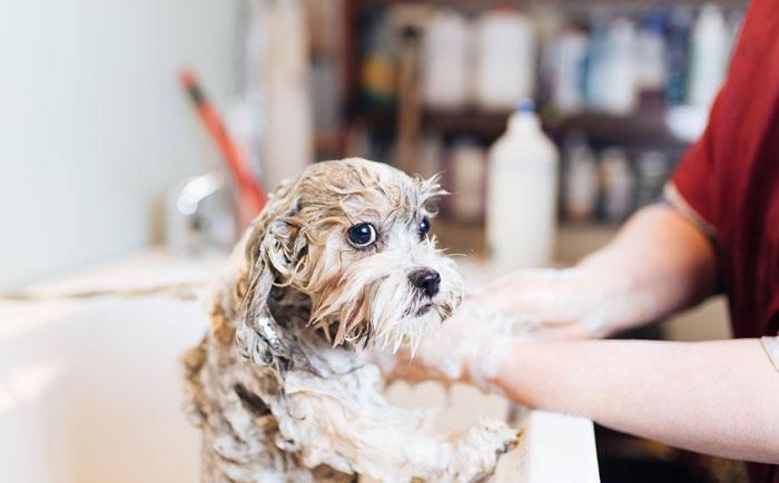 Guía para bañar a tu perro