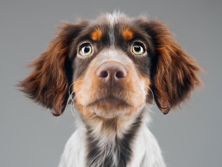 ¿Cómo ayudar a un perro en peligro?