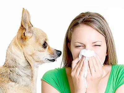 ¿Qué es la alergia a los animales?